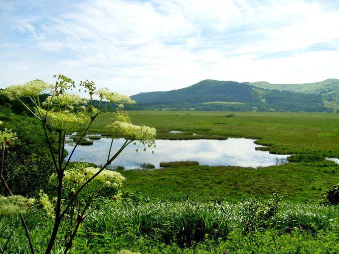 霧ヶ峰最大の静かな湿原「八島ヶ原湿原」を散策