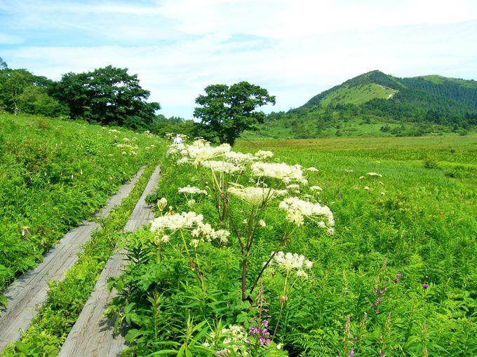 貴重な湿性植物や高山植物に出会う「八島ヶ原湿原」