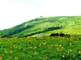 車山でニッコウキスゲ、八島ヶ原湿原で高山植物に出会う信州霧ヶ峰散策