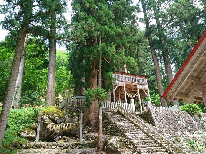 白山信仰ゆかりの神秘的神社「白山中居神社」