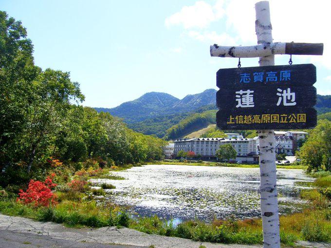 バスの起点「蓮池」にある志賀高原観光協会で情報収集
