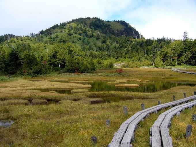標高1800M「四十八池」水辺の林道