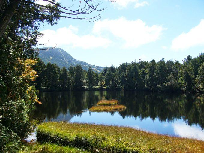 池めぐりコース最初の池「渋池」