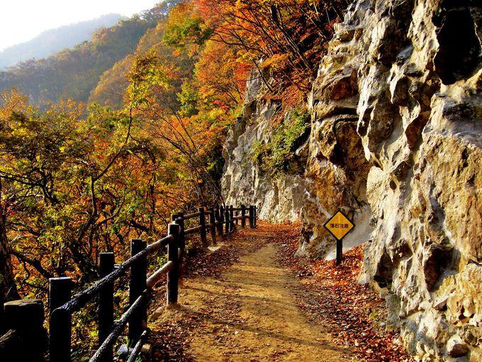 松川渓谷を茶庭に見立てた「舞の道遊歩道」を落ち葉踏みしめ散策
