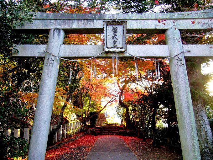 知る人ぞ知る隠れた紅葉スポット「聖天宮西江寺」