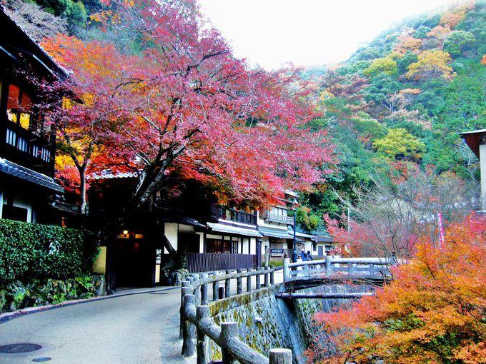 滝道沿いの紅葉を写す絶好の写真スポット「音羽山荘」