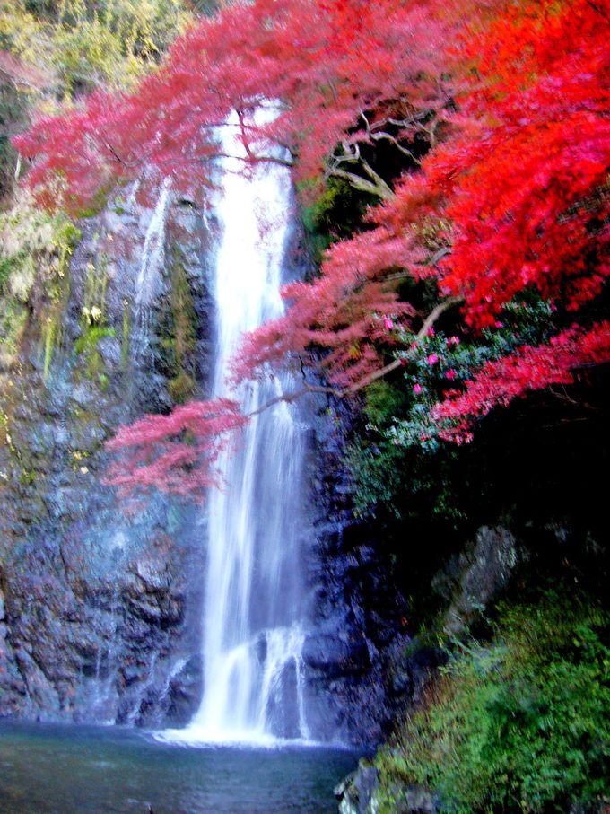 古来より芭蕉や西行、夏目漱石など多くの文人墨客が訪れた名勝「箕面大滝」