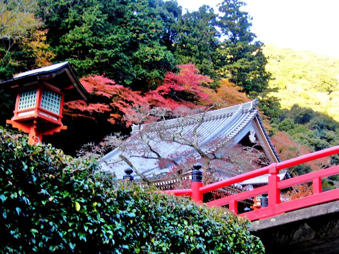 箕面川に架かる赤い欄干「瑞雲橋」が紅葉とともに映える「箕面山 瀧安寺(りゅうあんじ)」