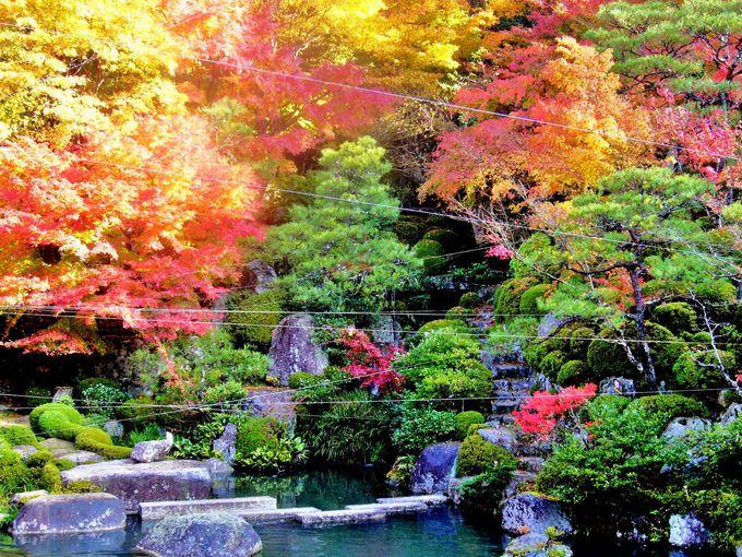 滋賀屈指の紅葉スポット「湖東三山」を巡る一日