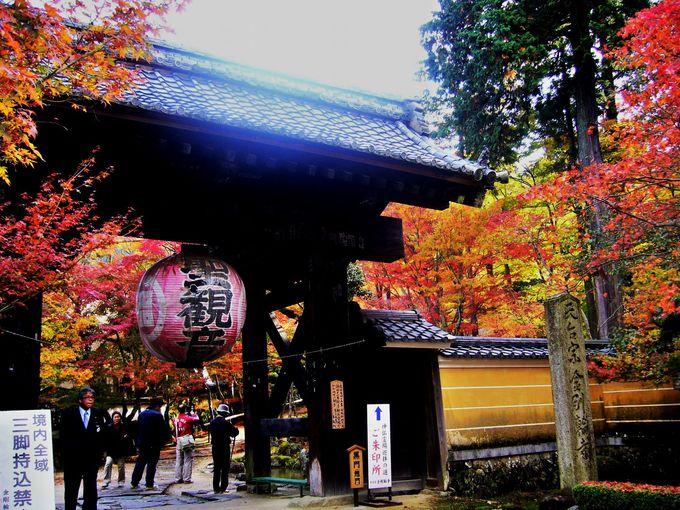 真っ赤な「血染めのカエデ」と呼ばれる「金剛輪寺」