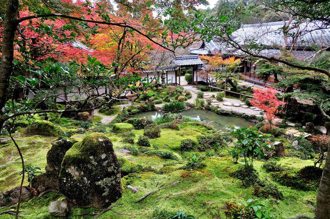 三重塔と楓が織りなす眺め!湖東三山最北の名刹「西明寺」