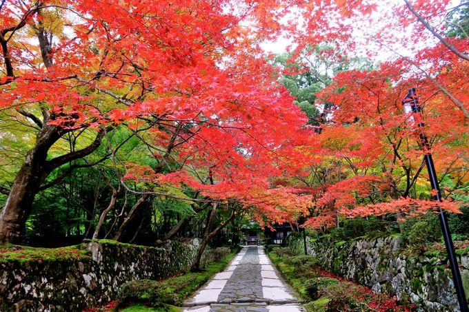 関西屈指の紅葉名所「湖東三山」~「永源寺」秋の近江路へ