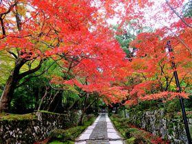 関西屈指の紅葉名所「湖東三山」〜「永源寺」秋の近江路へ