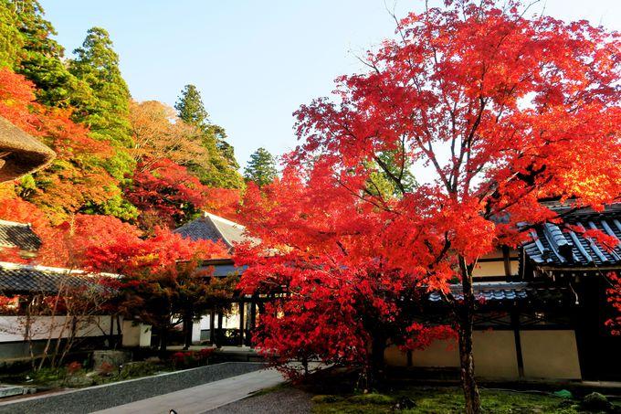 全山が朱赤に染まる関西でも指折りの紅葉の名所「永源寺」