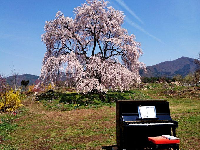 樹下の地蔵がのどかな風景!里の一番桜「中塩のしだれ桜」
