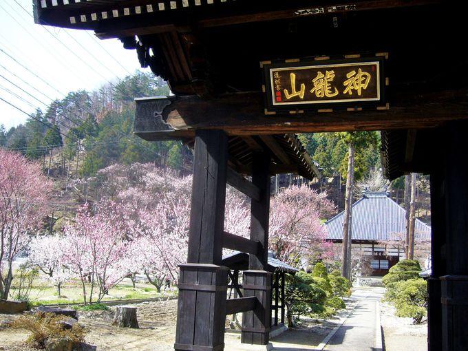 杏の里にある桜の名所「禅透院」
