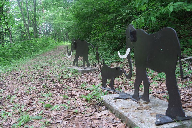 信濃町『癒しの森』象の小径コース