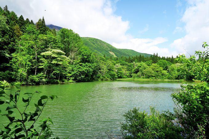 信濃町『癒しの森』御鹿池(おじかいけ)一周コース