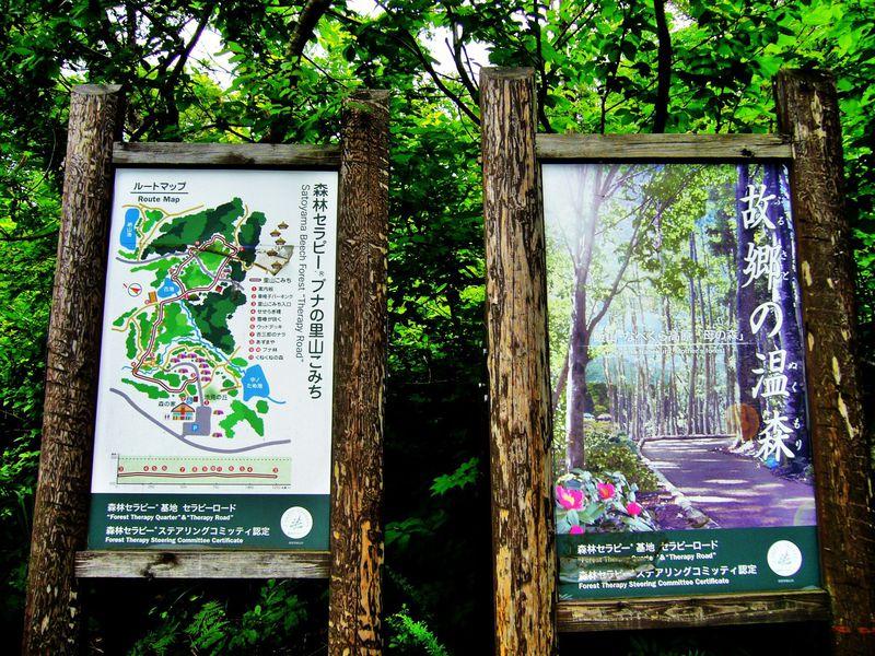飯山市『母の森』ブナの里山こみち