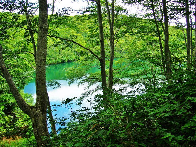 飯山市『母の森』茶屋池森林浴歩道