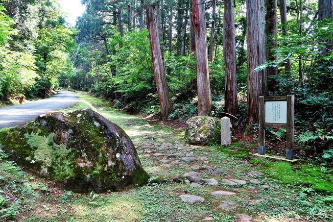 """菩提林の続く""""日本の道百選""""は石畳の旧参詣道"""