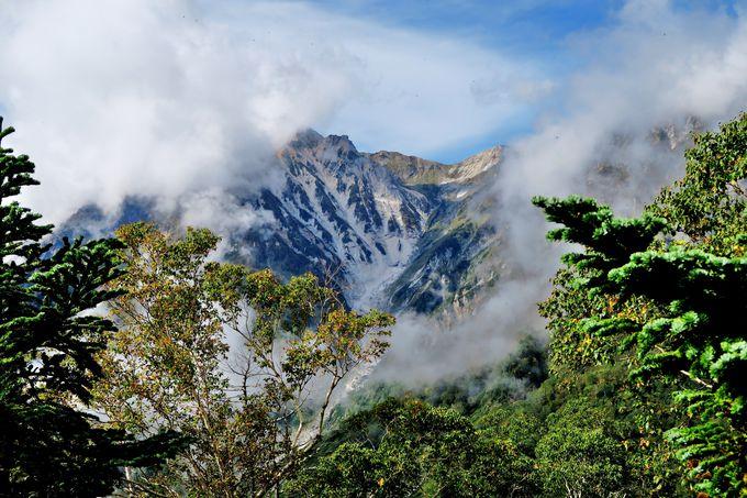 「展望湿原」で間近に迫る「白馬大雪渓」と三段紅葉に感動!