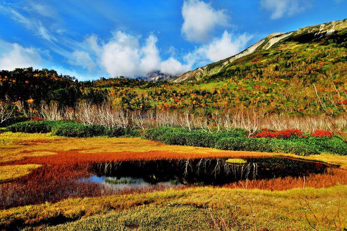 色とりどりの絵の具をまき散らした「ワタスゲ湿原」と「浮島湿原」