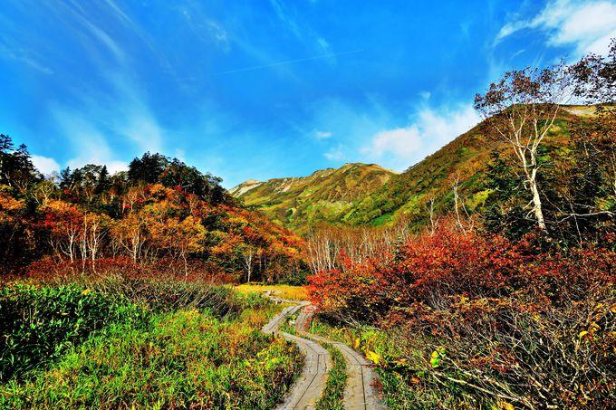 「ミズバショウ湿原」から一周5.5kmの遊歩道で4つの湿原をわたり歩く