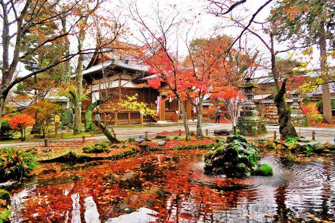 桜の見処は隠れた紅葉の名所