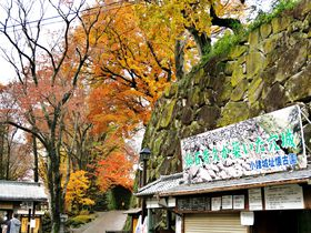 苔むした石垣に紅葉が映える、錦繍の信州小諸城址「懐古園」