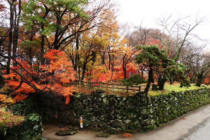 紅葉が映える戦国の世を見つめた自然石の苔むした石垣