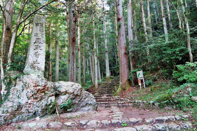 1425段の石段を踏みしめて、森林浴を楽しみながら山頂へ