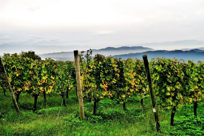 ワインを中心に氷見の食材や農園内の生き物が環になるセイズファーム