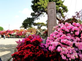 GWに行きたい花の名所!群馬・館林「つつじが岡公園」