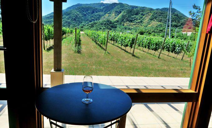 セトおじさんが目指すイタリア品種ワイン「カンティーナ・ジーオセット」