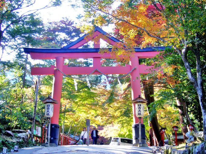 日本屈指の古社「日吉大社」で神猿(まさる)を探す