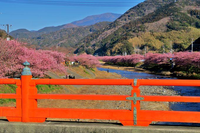 「峰小橋」から「豊泉橋」の河津川沿いを歩く