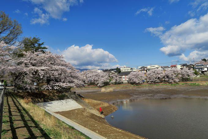 長坂IC付近の南アルプスとコラボする桜の名所