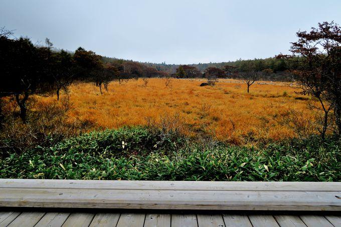 「沼ッ原湿原」から分岐する歴史の道