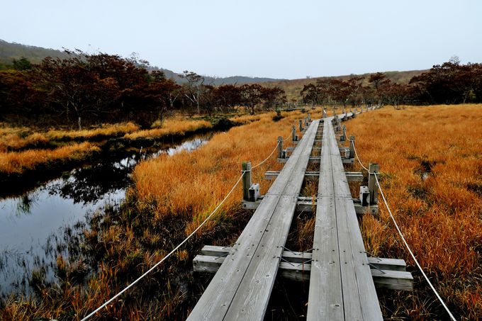 季節によって彩が変化する高山植物の宝庫「沼ッ原湿原」