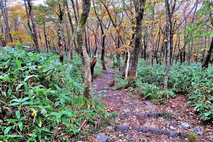 人里離れた山奥に存在する栃木県「沼ッ原湿原」