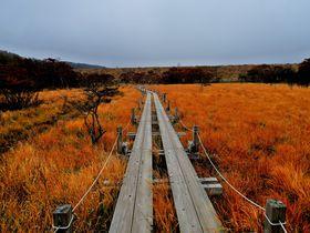 栃木県那須「沼ッ原湿原」は手軽に楽しめる穴場の亜高山湿原!
