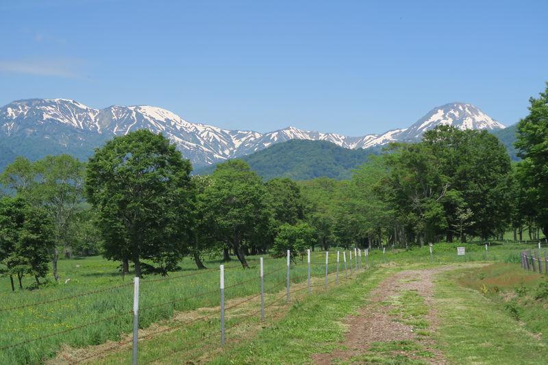 上越・妙高高原エリアで森と水辺のとっておきの自然に癒される