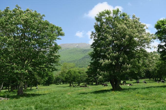笹ヶ峰高原の「笹ヶ峰一周歩道」は森林セラピーのゴールデンコース