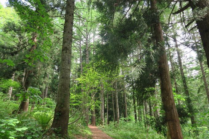 歩いて、歩いて、元気になる森林浴