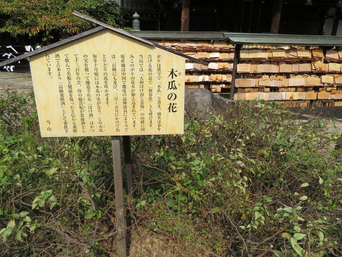 まずは本堂で日本最大の文殊菩薩にご挨拶
