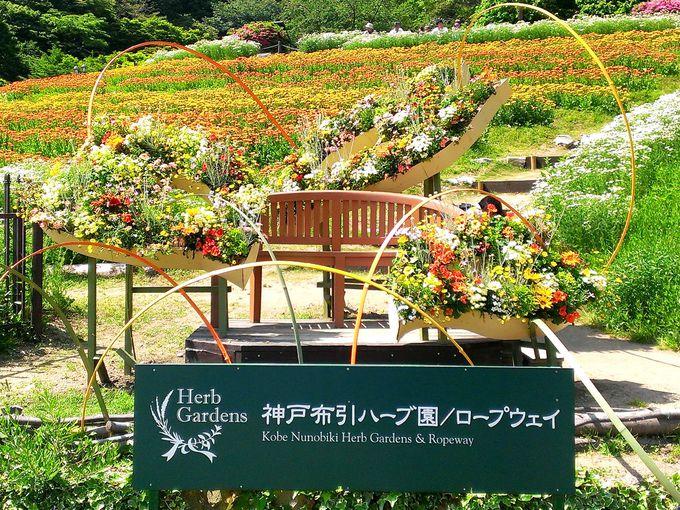 日本最大級のハーブガーデン「神戸布引ハーブ園」とは