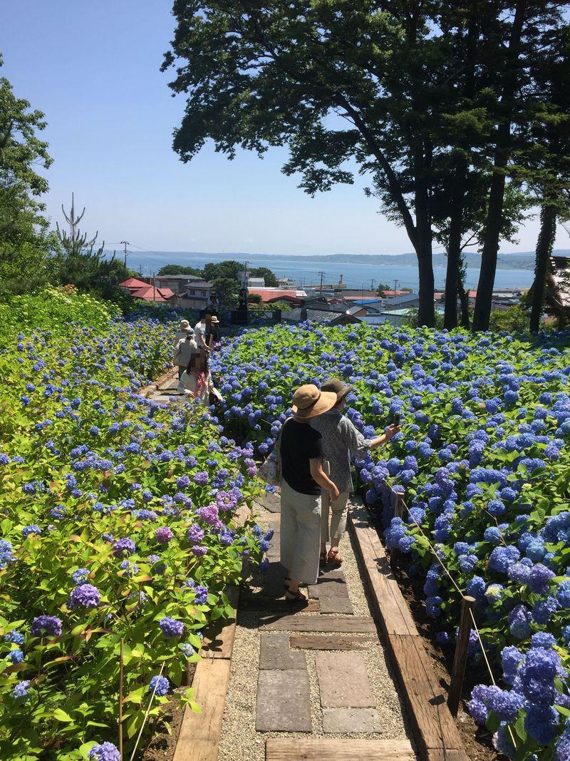 3つの青が織りなす世界〜あじさいと海と空〜