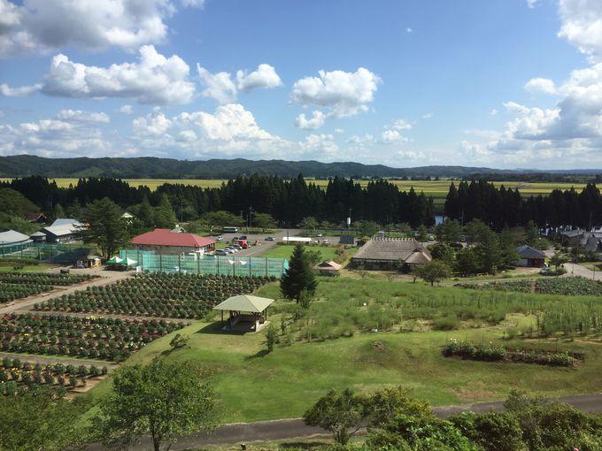 「丘の上のレストラン」からの眺めは最高!