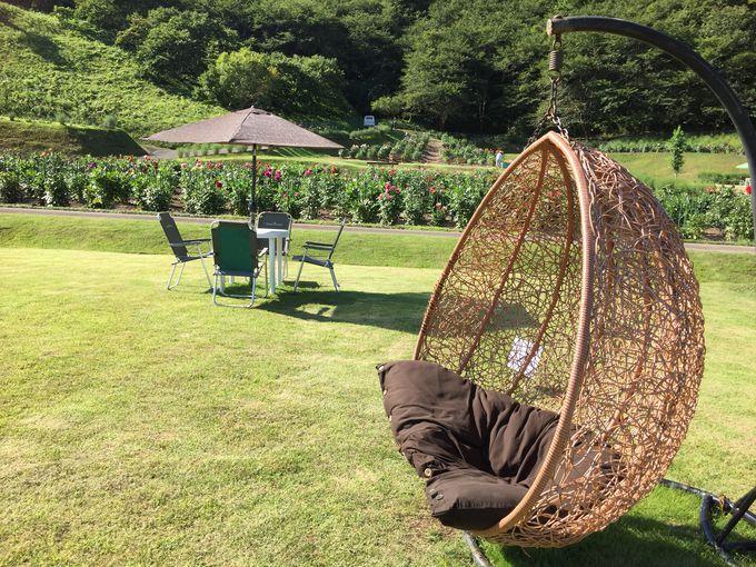 「秋田国際ダリア園」でゆっくりのんびり過ごそう!